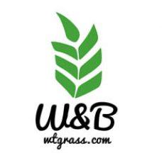 W&B<br>Производство зелёных соков